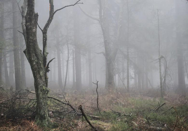 Woods - Free Forest Stock Photos