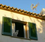 Free Photo - Cat in the Window