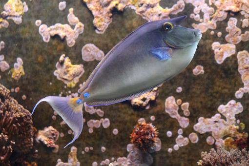 Rhino Fish - Free Stock Photo