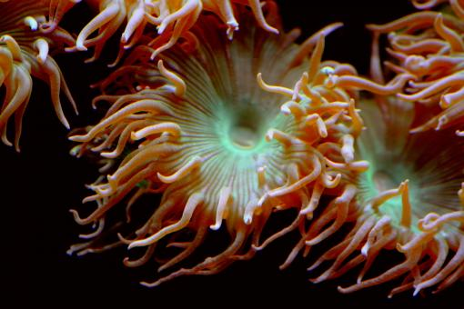 Sea Anemone - Free Stock Photo
