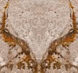 Free Photo - Phoenix Moss Wings