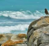 Free Photo - Bird on the Shore