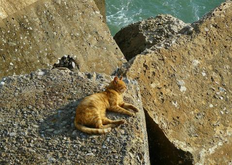 Cat on the Rock - Free Stock Photo