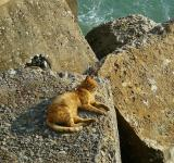 Free Photo - Cat on the Rock