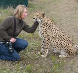 Free Photo - Photographer with Cheetah