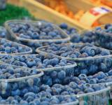 Free Photo - Boxes of Blueberries