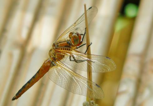 Dragonfly - Free Stock Photo
