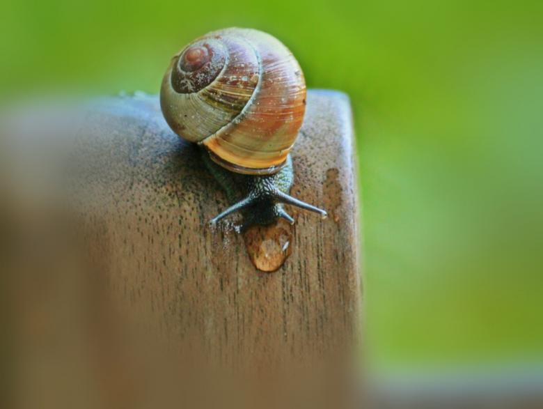 Snail Free Insect Stock Photos