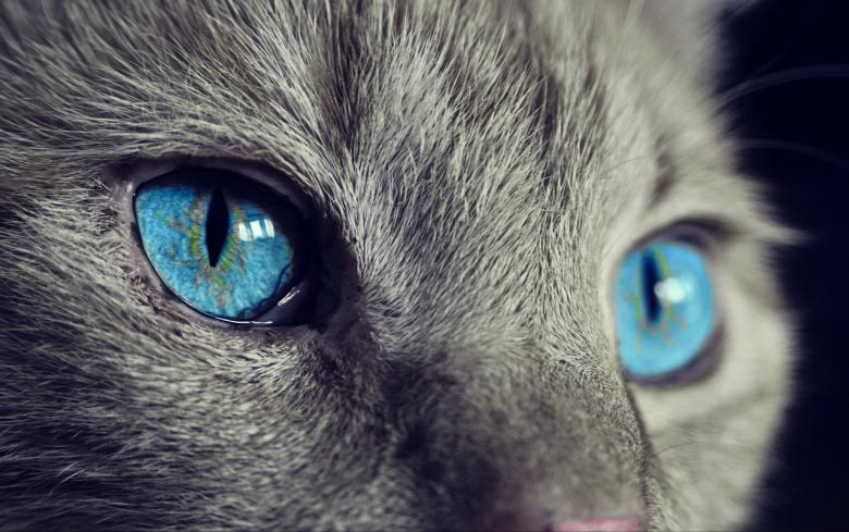 Free Stock Photo of Cat Eyes Created by Pixabay