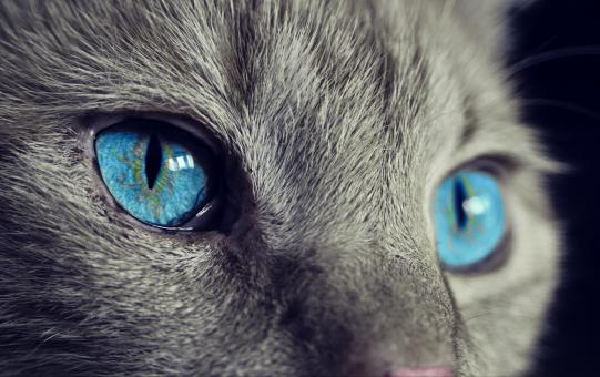 Cat Eyes - Free Stock Photo