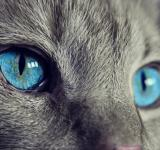 Free Photo - Cat Eyes