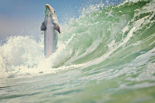 Dolphin Having Fun - Free Stock Photo