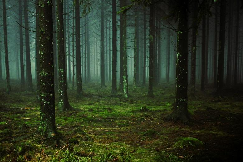 Free Stock Photo of Wild Forest Created by Pixabay