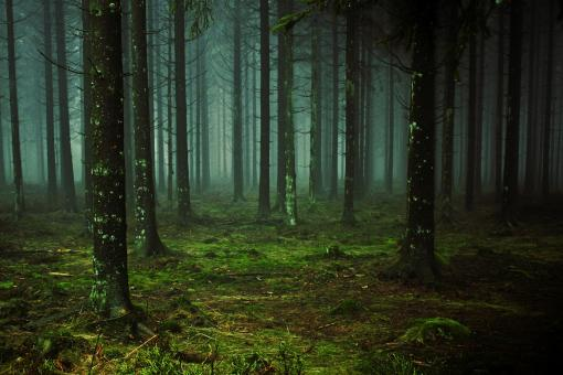Wild Forest - Free Stock Photo