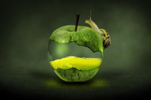 Snail on the Apple - Free Stock Photo