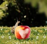 Free Photo - Snail on the Apple