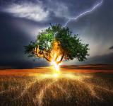 Free Photo - Lightning on the Tree