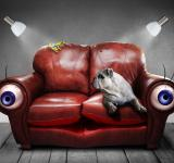Free Photo - Pet on the Sofa