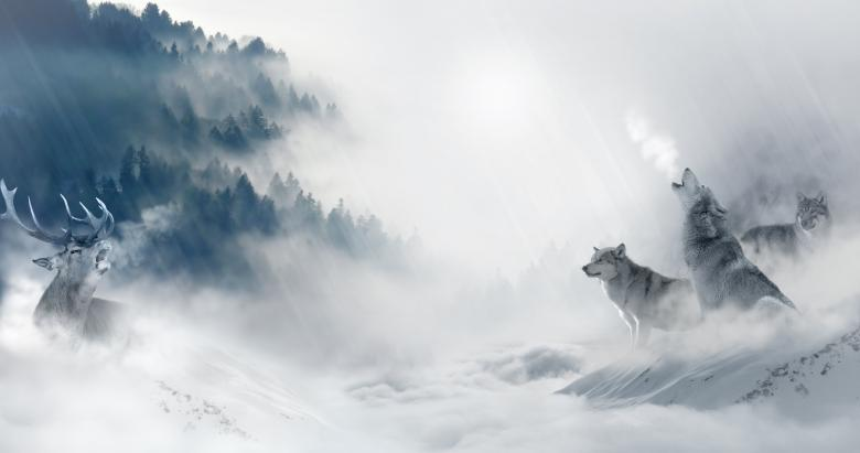 Free Stock Photo of Wolves on the Hunt Created by Pixabay