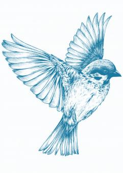 Blue Bird - Free Stock Photo