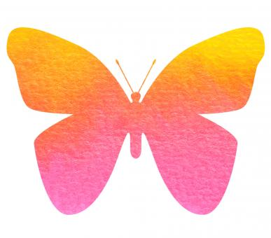 Colorful Butterfly - Free Stock Photo
