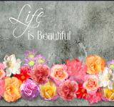 Free Photo - Life is Beautiful