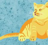 Free Photo - Yellow Cat