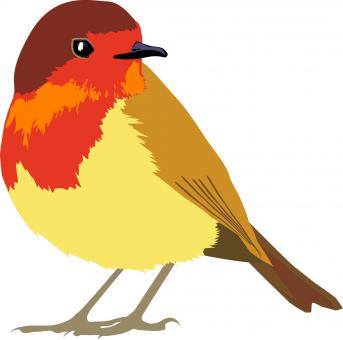 Colorful Bird - Free Stock Photo