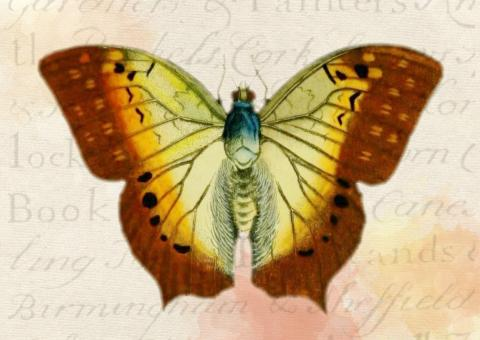 Butterfly Sketch - Free Stock Photo