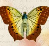 Free Photo - Butterfly Sketch