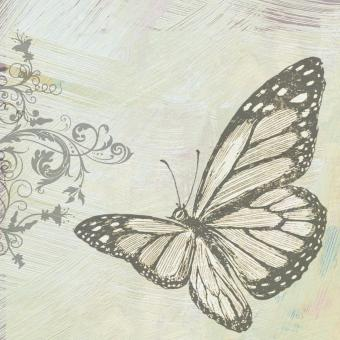 Sketch of a Butterfly - Free Stock Photo
