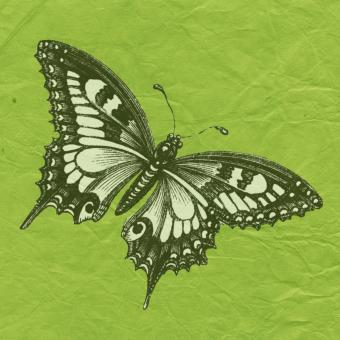 Butterfly with green Background - Free Stock Photo