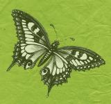 Free Photo - Butterfly with green Background
