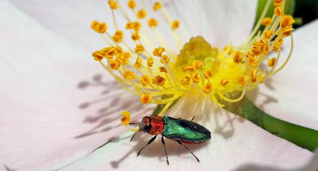 Yellow Flower and Beetle - Free Stock Photo