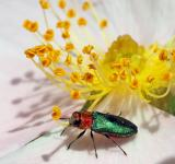 Free Photo - Yellow Flower and Beetle