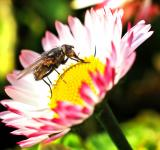 Free Photo - Fly on Pink Flower