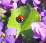 Free Photo - Ladybird in the Garden
