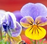 Free Photo - Colorful Flower