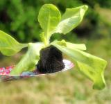 Free Photo - Fresh Green Plant
