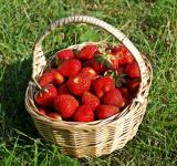 Free Photo - Strawberries in a Basket