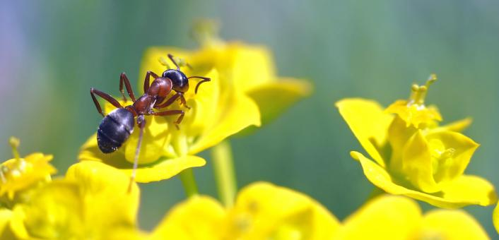 Ant in the Garden - Free Stock Photo