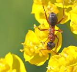 Free Photo - Ant on the Flower