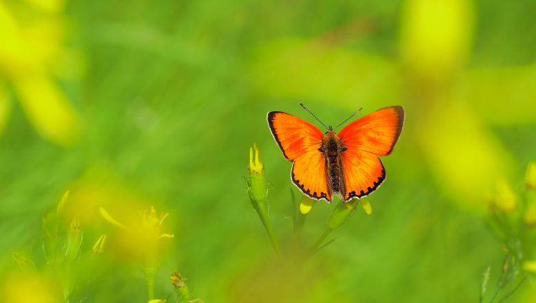 Butterfly in the Garden Free Insect Stock Photos