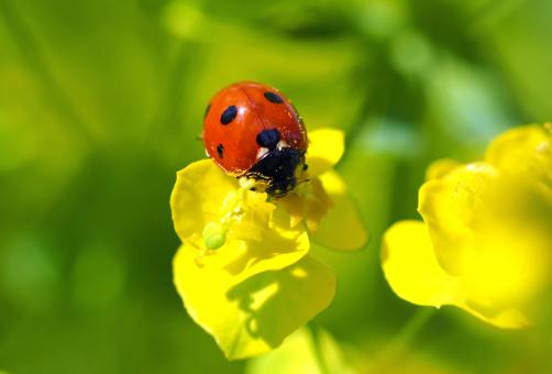 Red Bug in the Garden - Free Stock Photo