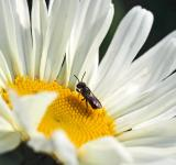 Free Photo - Fly on the White Flower