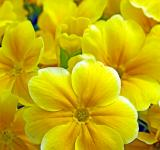 Free Photo - Group of Yellow Flowers