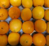 Free Photo - Fresh Oranges