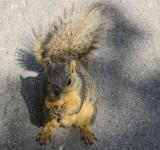 Free Photo - Brown Squirrel