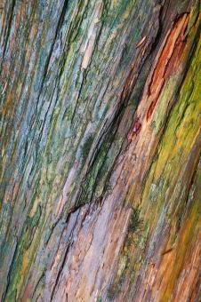 Water Colored Wood Texture - Free Stock Photo