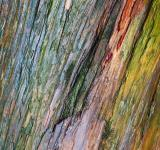 Free Photo - Water Colored Wood Texture